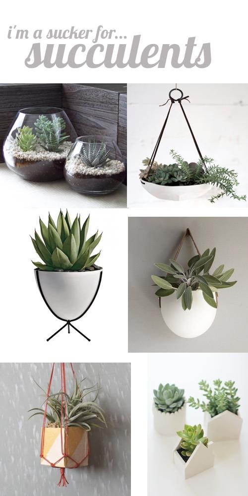 succulent roundup